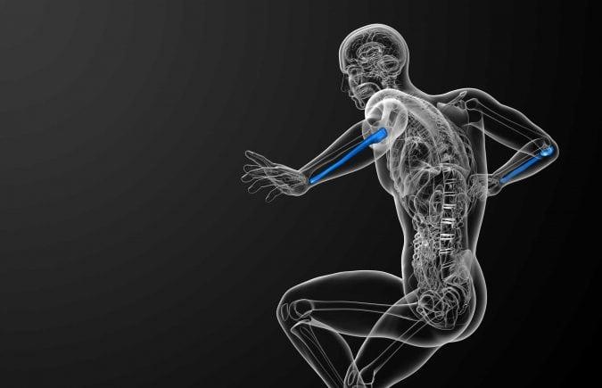 Three-dimensional medical image of ulna bone in forearm.