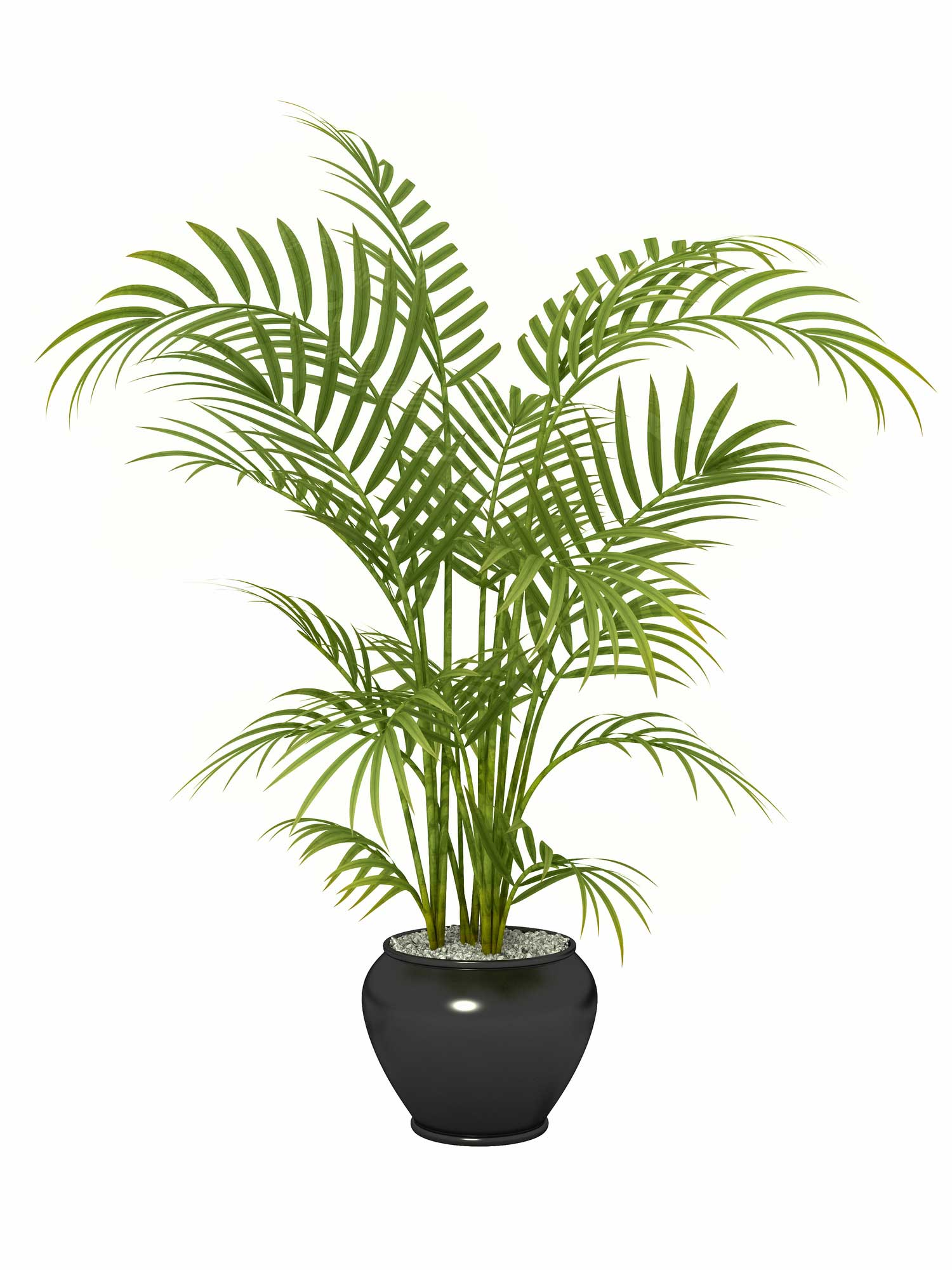 1. Areca Palm