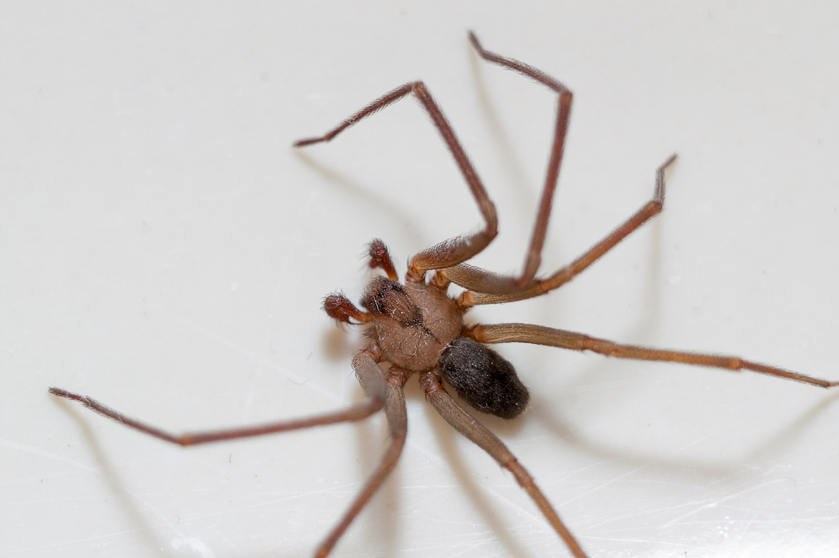Spiders Bite: Read This Before You Shriek for Help