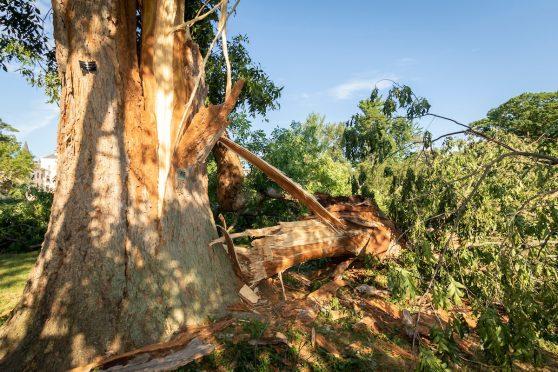 Fallen IOL Tree